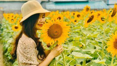 Photo of Thỏa sức sống ảo tại cánh đồng hoa hướng dương Ninh Bình